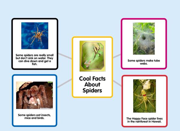 Cool Facts Bout Spiders